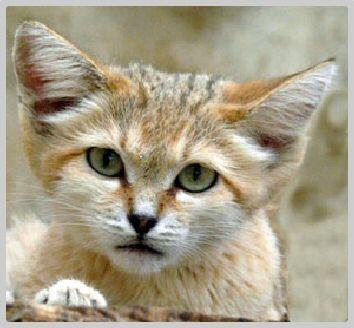 Chat rencontre algerien