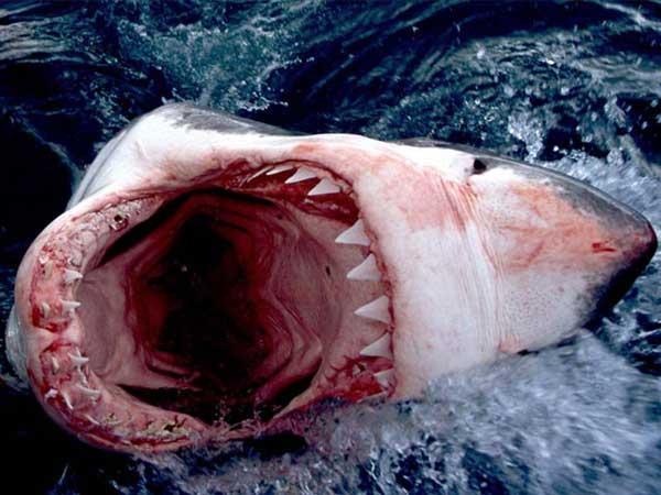 Le Grand Requin Blanc   Le blog du photographe Patrice HERAUD